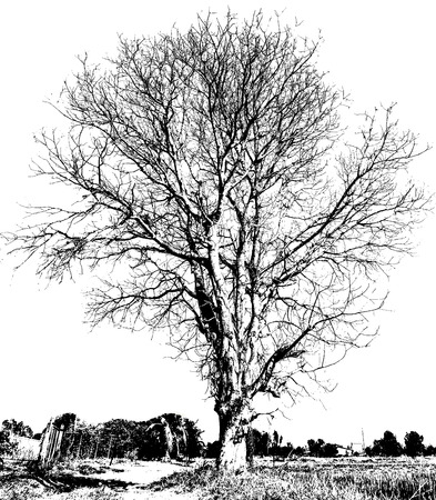 leafless: Black and white drawing of a dry tree without leaves, which is abstract. Stock Photo