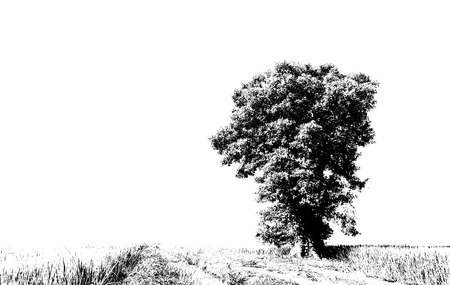 isolates: Isolates Abstract Tree Silhouette black and white in rural Thailand.