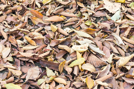 Background, which leaves falling into a heap on the ground organic dry. photo