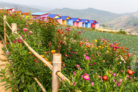Resort colorful bamboo fence with flowers on the hill somewhere. photo
