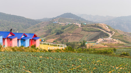 Serene mountain views from above Phu resorts and cabbage plants. photo