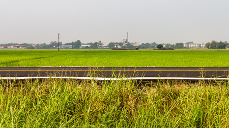 rice mill: Grass beside the road, with green rice mill and a scene in the countryside.