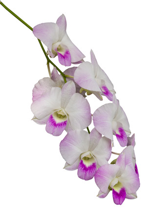 isolates: Isolates bouquet of orchids, white, purple, a beautiful bunch hanging from the branches.