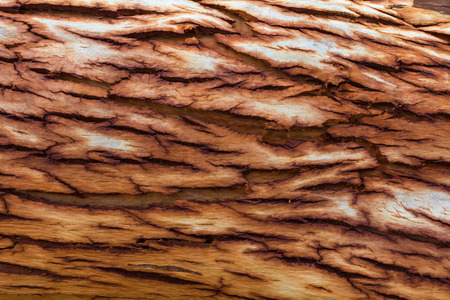 clearly: Close up background texture of dry bark, eucalyptus, which is clearly patterned.
