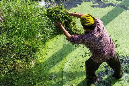 spawn: View from above, men wore Balaclava Spawn with weeds and garbage, sewage swamp. Stock Photo