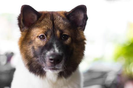 breed: Mixed breed dog