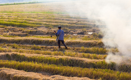 Thailand farmers to make the fuel burn straw in the harvest is complete, which causes global warming.