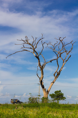 clouds and skies: Bare tree dead dry rice amid clouds skies with passenger transfer students sailed on the road. Stock Photo