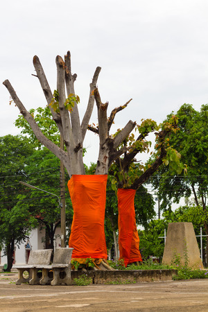 robes: Bodhi tree, which was covered by cutting branches and leaves covered with saffron yellow robes.