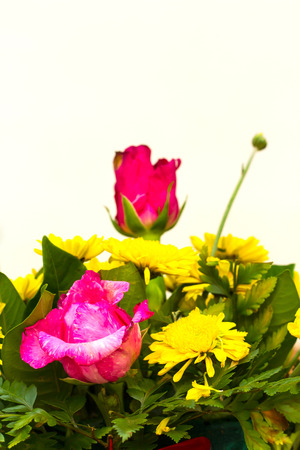 droop: Beautiful pink roses droop but torn with yellow gerbera flower with a white stain scene. Stock Photo
