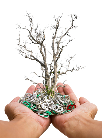 aluminum cans: Isolate dead dry trees growing on a pile of aluminum cans in the ring at the hands of humans.