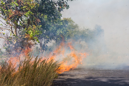 tertiary: Grass beside the fire, which caused a strong wind to make tertiary smoke pollutes the environment. Stock Photo