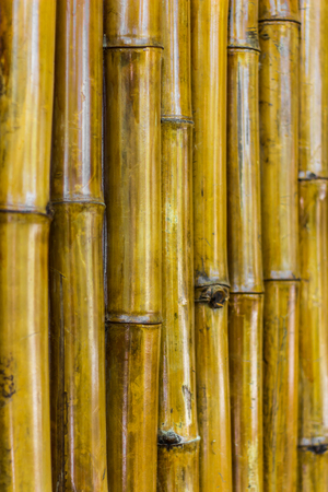 focuses: Close up textured background bamboo brown varnish, which focuses on the distinctive and blurred.