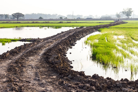 green ridge: Trail Ridge Road cuts through the green paddy fields where water filled the area. Stock Photo