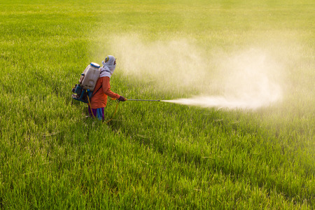 agriculture industry: Thailand Man farmer to spray herbicides or chemical fertilizers on the fields green rice growing.