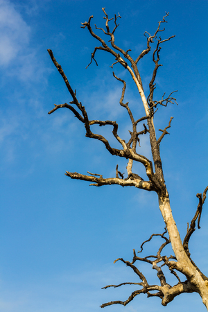 bark peeling from tree: Close up of bare tree branches, peeling bark of dead, with the sky as a backdrop.
