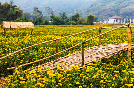 vibrant cottage: Bamboo bridge garden marigolds blooming with cottage houses and mountains as a backdrop.