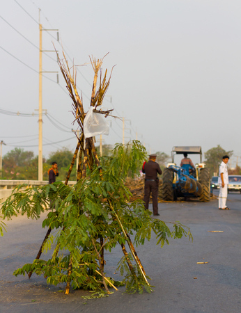 jointly: Sugar cane install jointly symbolize a barrier to keep the tractors have cleaned debris from the road. Stock Photo