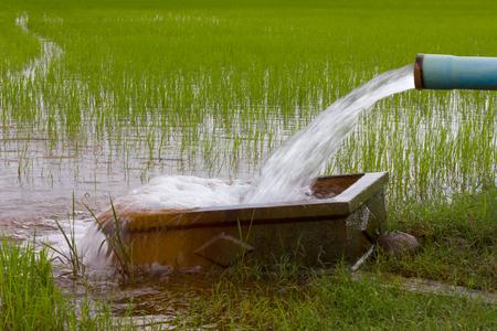 Das Pumpen von Wasser aus Kunststoff-Rohr in den Boden, die einen rechteckigen Betonstützen in den Reisfeldern hat.