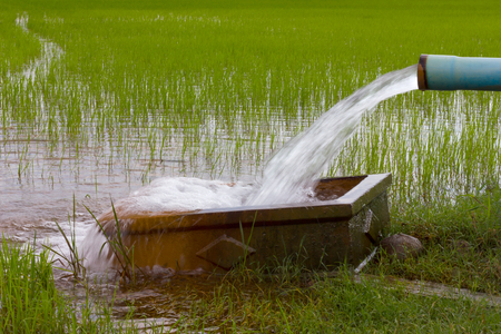 Pumping water out of plastic pipe into the ground, which has a rectangular concrete support in the rice fields. Stockfoto