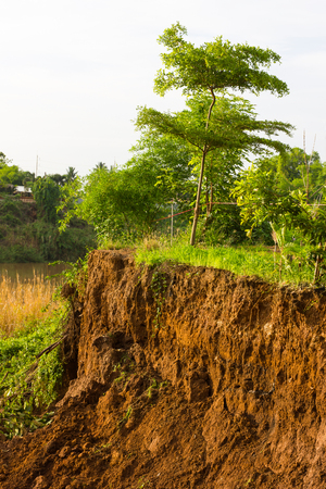 mud slide: Slide soil erosion caused by groundwater into the river with a tree growing on the ground.