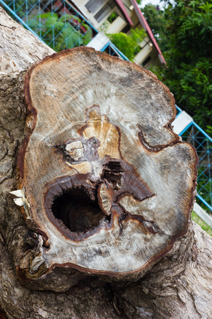 face in tree bark: Close-surface section of tree stumps, which resembles a large human face on the bark. Stock Photo