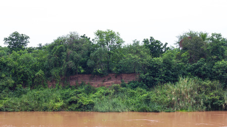 land slide: Landscape trees growing on the shore of the river, which flows forest land slides and floods.