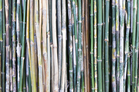 retail place: Background bamboo as green and yellow vertical line is a different place for retail. Stock Photo