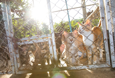 uncomfortable: Cats are backlit, which acted like outside because, trapped together in cages, steel mesh very uncomfortable.