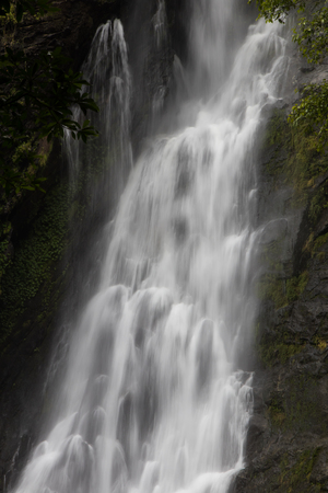 swiftly: Close-stream waterfall which flows swiftly through severe cliff rocks with ferns, moss covered trees.