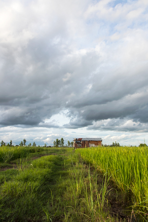 looked: View below the old tin roof shack which looked through the rice paddies to the background cloudy sky. Stock Photo