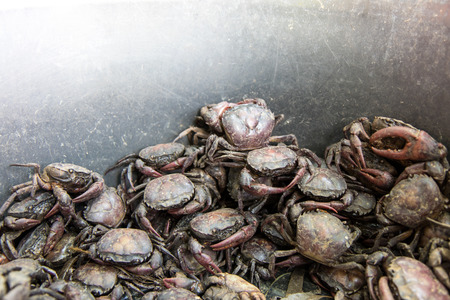 stackable: Field crab much alive stack is trying to escape, which was captured by farmers. Stock Photo