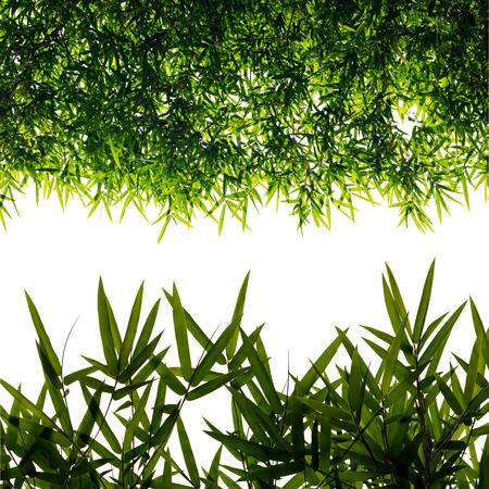 Isolates background of leaves of bamboo, which is backlit and then editing together in different sizes.
