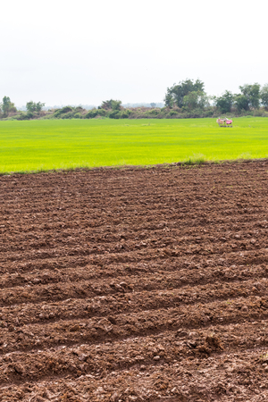 Landscape view wide areas of land were prepared for plowing paddy crop cultivation.