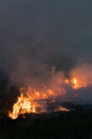 Lots of smoke and flames from burning stubble rice farmers can cause dangerous global warming. Stock Photo