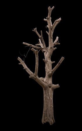 Isolate large bare tree without leaves trimmed branches away until only the stump.