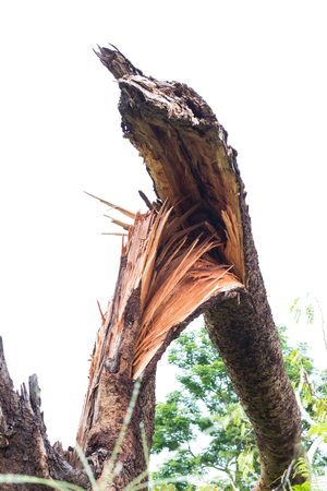 Close-up image of a steamed stem tree with broken stem torn off by the wind blowing the storm.