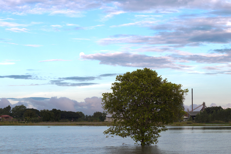 View the flooded area with green bushes near rice mills in the countryside with daytime sky clouds. Stock Photo