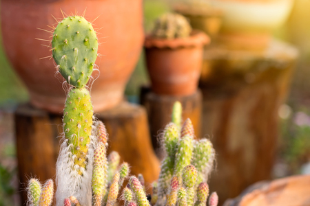 Close to the small decorative cactus, which is about to wither away, near the large pots on the stumps in the early morning.