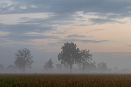 Views of trees, forests and fog in the early morning in the rice fields which are commonly seen in winter in the Thai countryside. Banque d'images