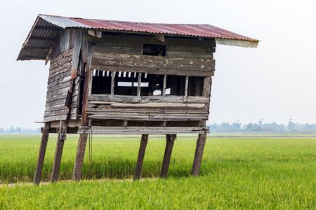Vicino alla vecchia capanna di legno, che è stata lasciata per molto tempo, in decomposizione e appoggiata tra le risaie nelle zone rurali della Thailandia. Archivio Fotografico