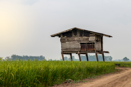 Old wooden huts have been left for a long time, decaying and leaning in the midst of rice paddies, often seen in rural Thailand Stok Fotoğraf