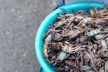 Close-up pictures of many purple claw crabs and plastic containers placed on the streets, which are commonly seen in the Thai market.