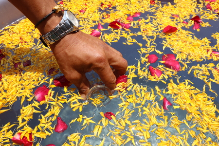 Many yellow and red flower petals background with male hands which are drawing water with glass bottles for use in festivals.