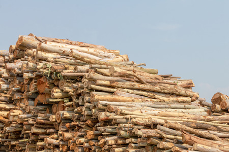 Many eucalyptus logs are stacked unorganized during the day, which has a sky as a backdrop.