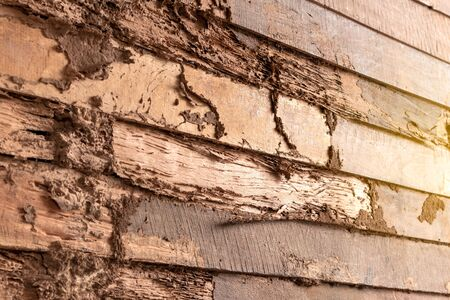 The close-up background of the old wooden wall surface has been eroded which is caused by the eating of termites within a Thai house. Stock Photo