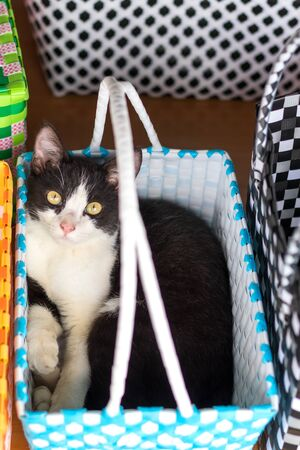 Close-up of a cute black-and-white Thai cat pretending to lie and stare at something curious in a colorful plastic woven basket.