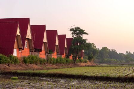 A red-roofed homestay resort view is lined up on a mound in a rural area of a rice field in the early morning.