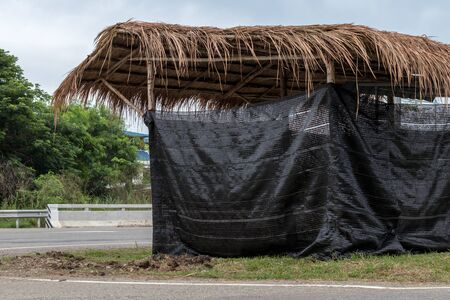 Close-up view of the shed, vetiver that surrounds the shading black net installed on the side of the Thai countryside road. Stockfoto