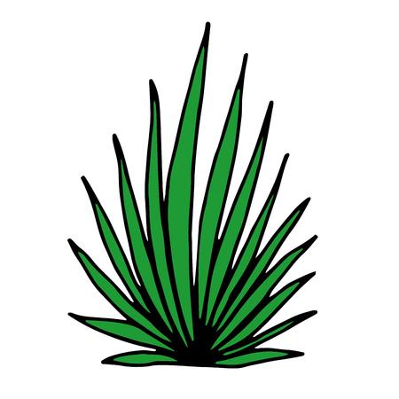 Vector illustration leaves of palm tree Illustration